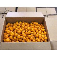 他の写真2: 橘花ジン  500ml