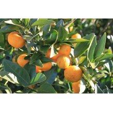 他の写真1: 橘花ジン  500ml