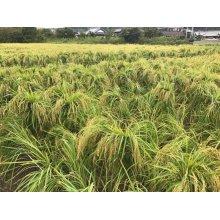 他の写真3: 紀土 あがらの田で育てた山田錦 低精米八十%純米酒 1800ml