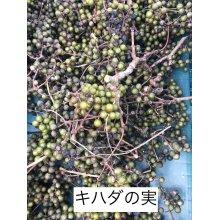 他の写真2: 【発売中】橘花ジン<邂逅>(ステンレスボトル) 45度 500ml